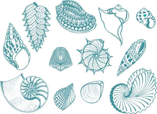 Decalque para Porcelana - Conchas Azul Turquesa