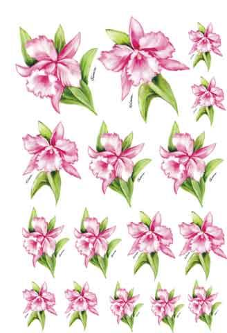 Decalque para Porcelana - Orquídea Rosa