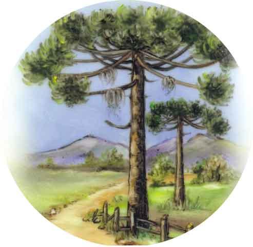 Decalque para Porcelana -Pinheiro Estrada 19 cm