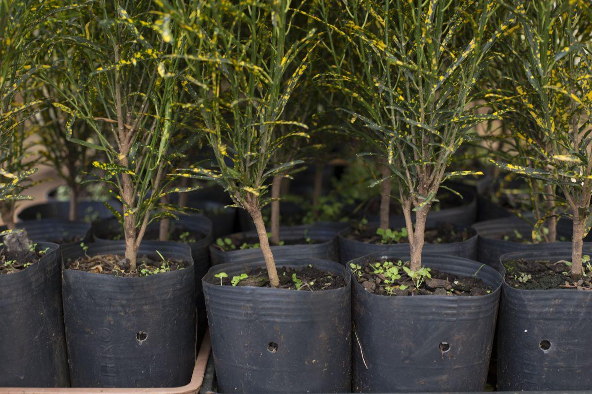 100 Vaso Embalagem para Mudas Plantas Flexível 33L com Alça