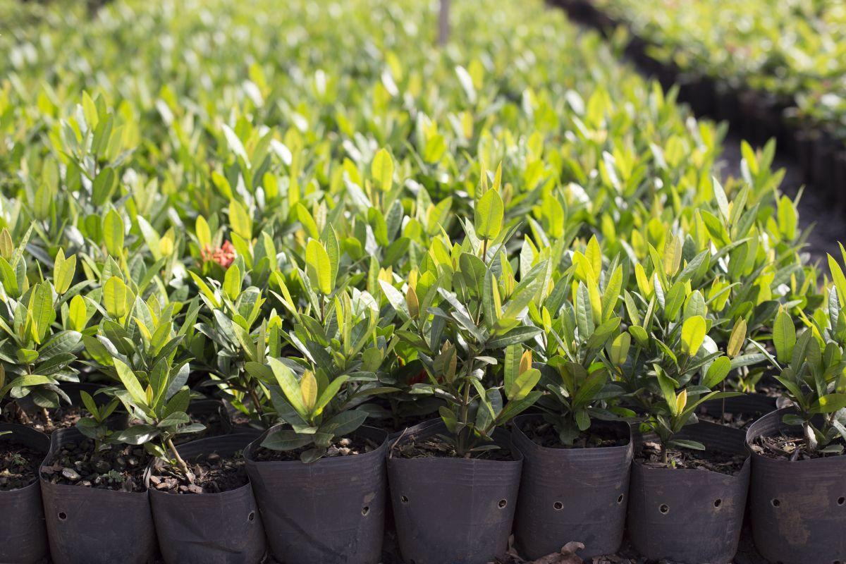 10 Vaso Embalagem para Mudas Plantas Flexível 33L com Alça
