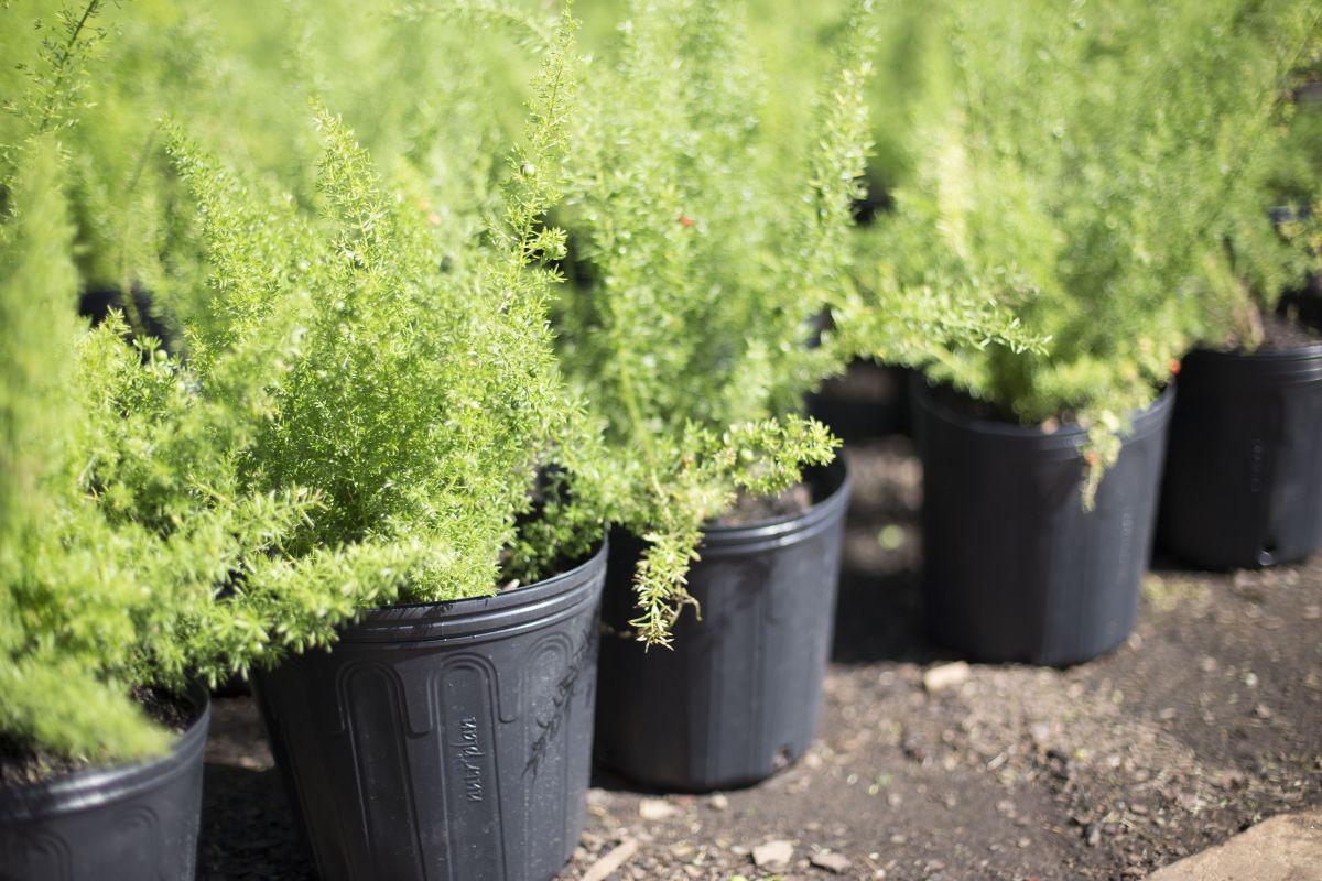 30 Vaso Embalagem para Mudas Plantas Flexível 33L com Alça