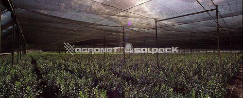 Tela Sombrite Preta 50% - 2 Metros X 50 Mts