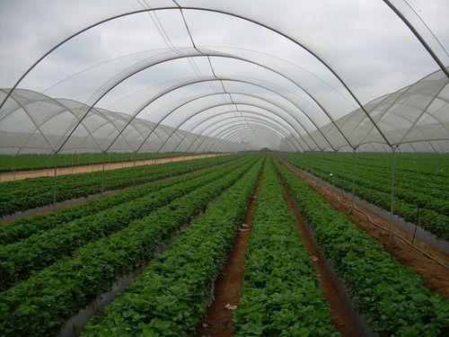 Filme Plastico Para Estufa Agricola 2,20m X 10m 100 Micras