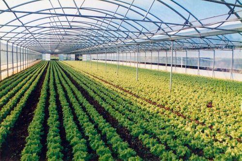 Filme Plastico Para Estufa Agricola 2,20m X 5m 100 Micras