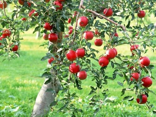 Fertilizante Para Frutas Adubo Forth - 400g