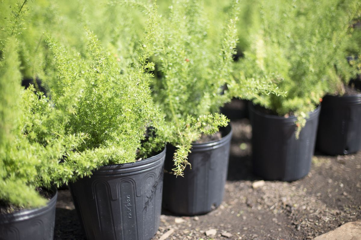 5 Vaso Embalagem para Mudas Plantas Flexível 33L com Alça