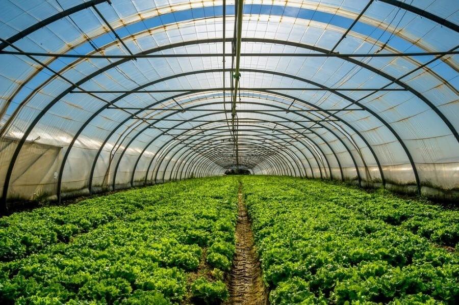 Filme Plástico Transparente Para Estufa Agrícola 6m X 2m 100 Micras