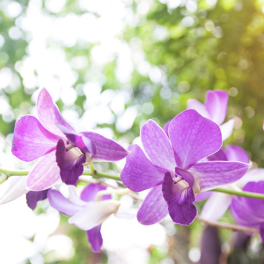 Substrato para Orquídea Mix Pinus Coco Carvão Vida Verde 2L