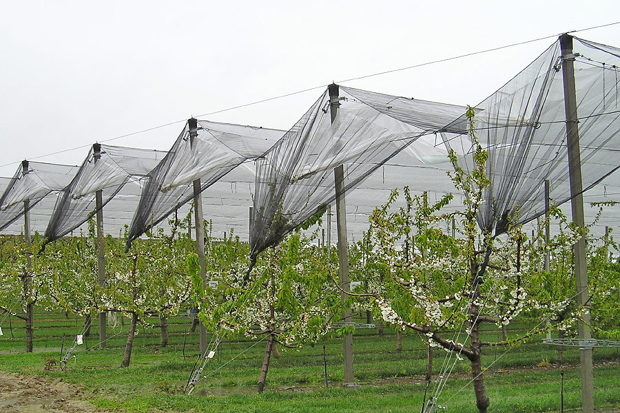 Tela Monofilamento Proteção Antigranizo Pássaros Ventos 6x100