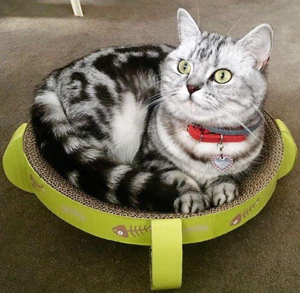 Arranhador para Gato com CATNIP Pawise
