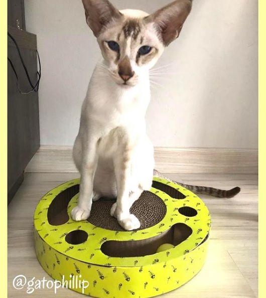Arranhador para Gato Com Bolinha Pawise