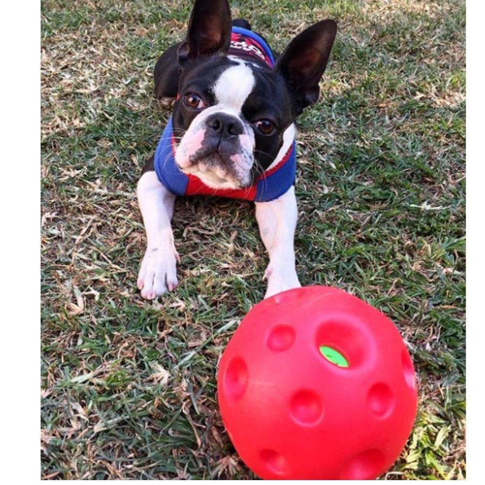 Bola Sonora Interativa para cachorro Pawise