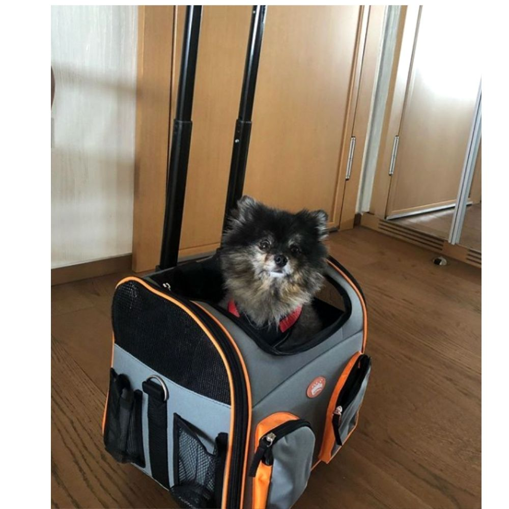 Bolsa de Transporte Cão e Gato com Rodas Pawise