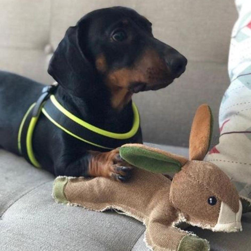 Brinquedo de Pelúcia Coelho RESISTENTE Pawise