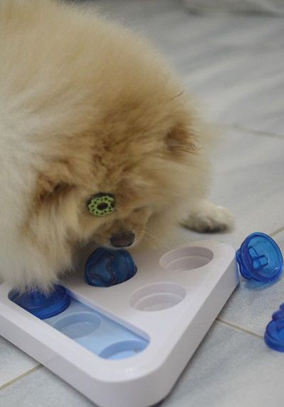 Brinquedo Interativo Cachorro Triângulo Pawise