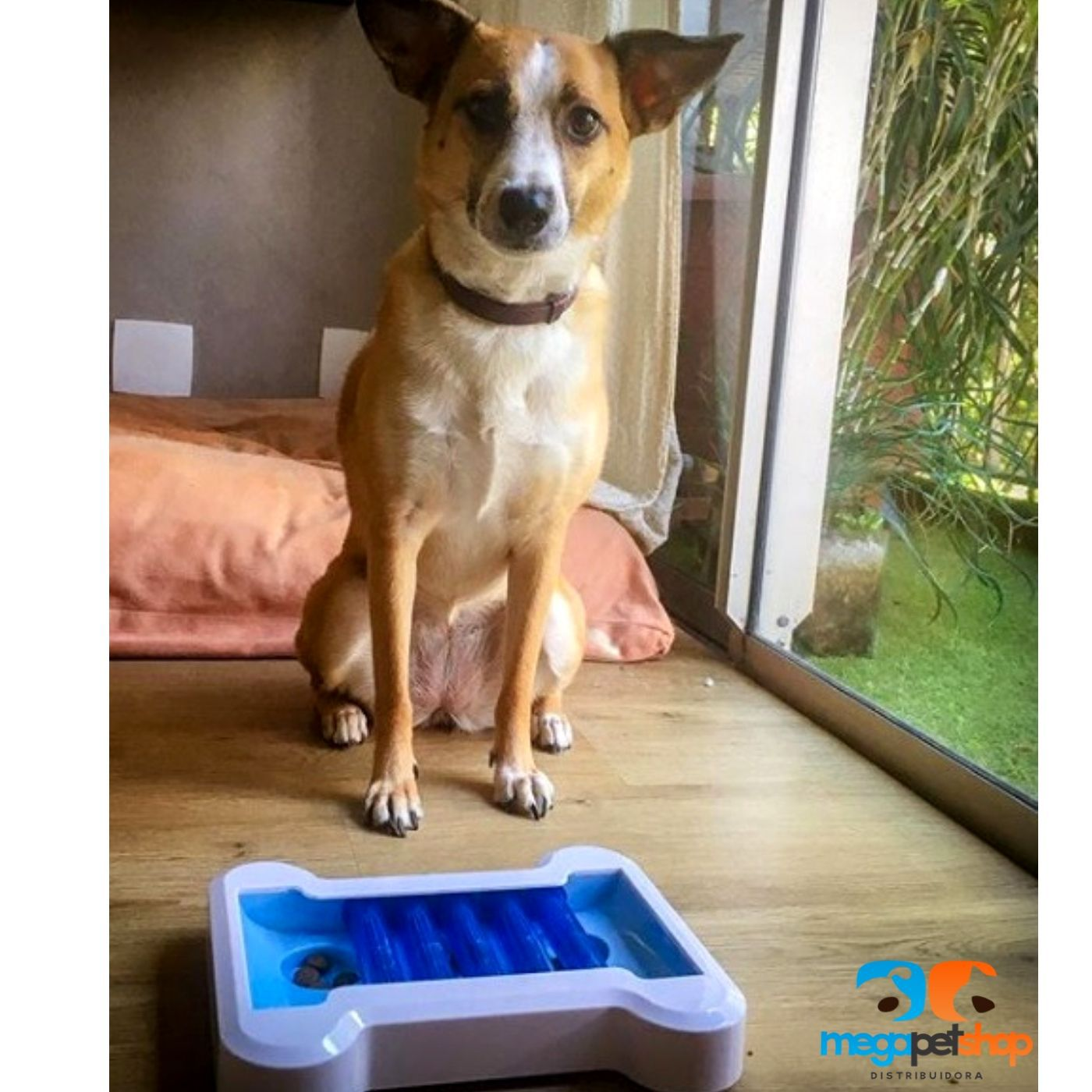 Brinquedo Interativo para Cachorro - Osso Pawise