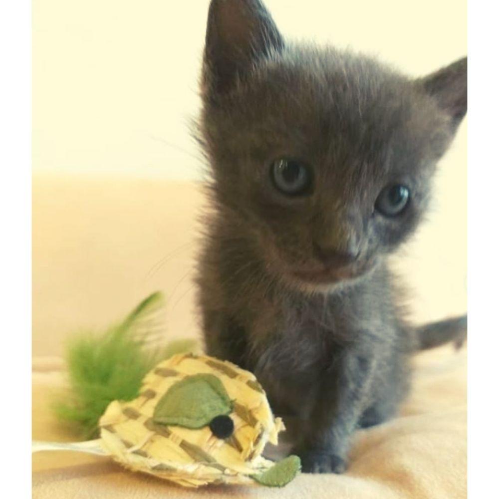 Brinquedo Papelão para Gato Rato Pawise