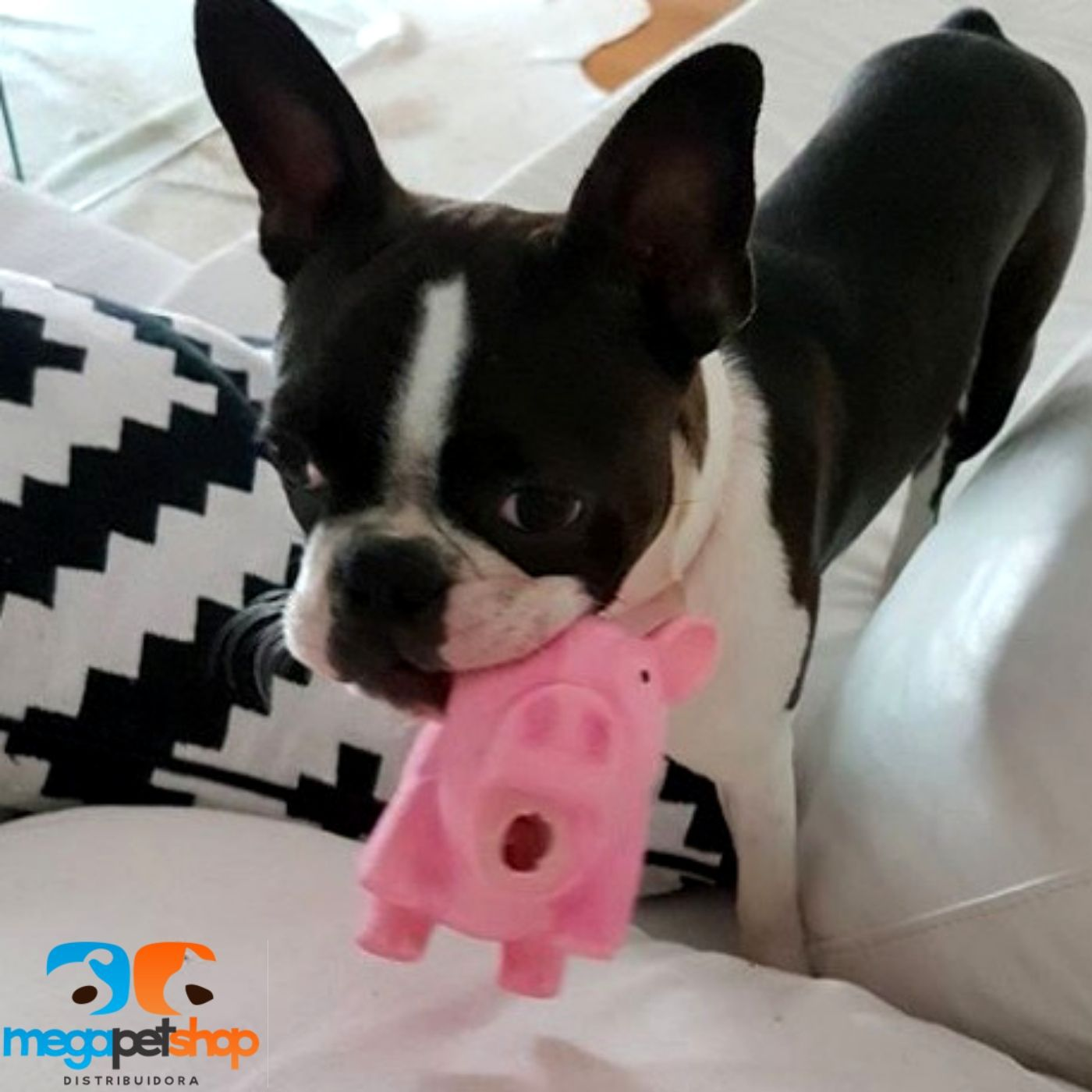 Brinquedo Porco c/ Apito (grunhe) Pawise
