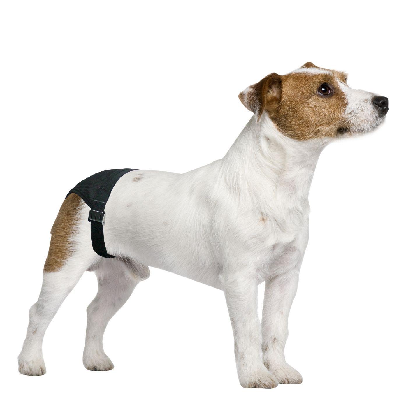 Calcinha Higiênica para Cachorro GG Pawise
