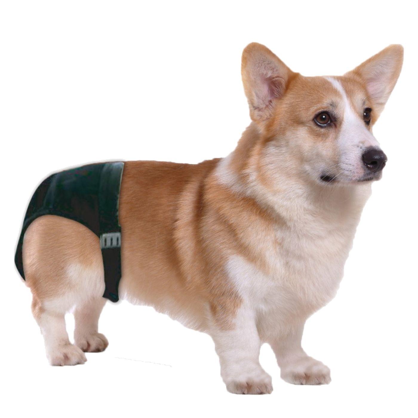 Calcinha Higiênica para Cachorro M Pawise
