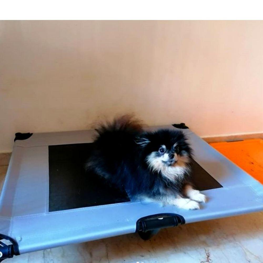Cama Alta para Cachorro Pawise