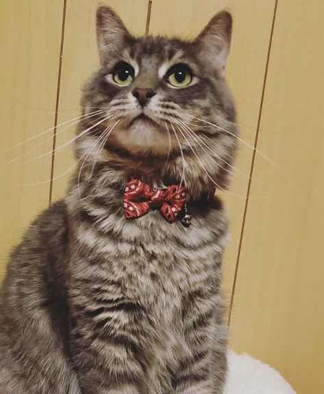 Coleira para Gato com Estampa Vermelha Pawise