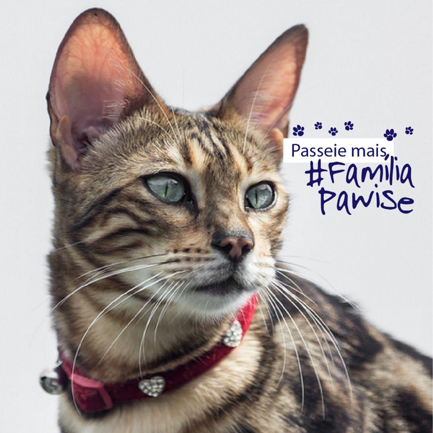 Coleira para Gato Rosa Diamante Pawise
