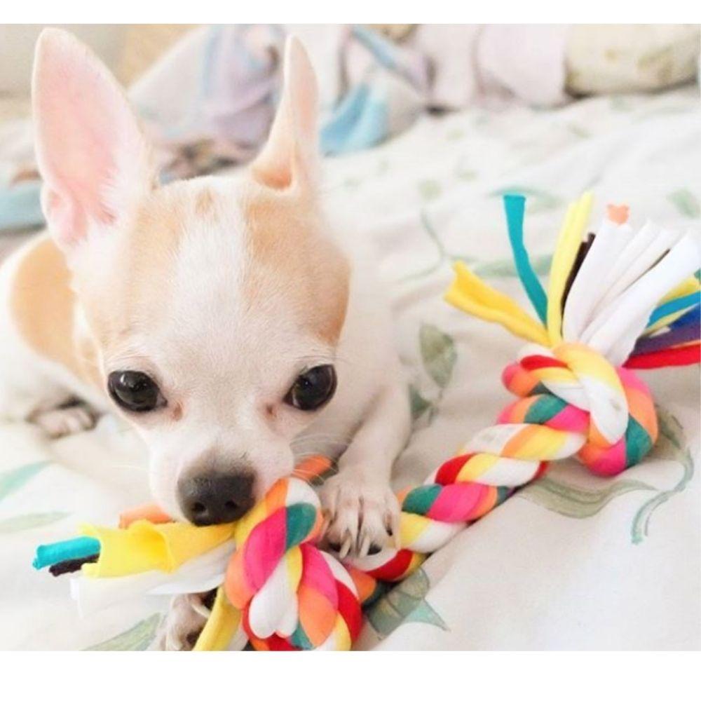 Brinquedo para Cachorro Corda Trançada Pawise