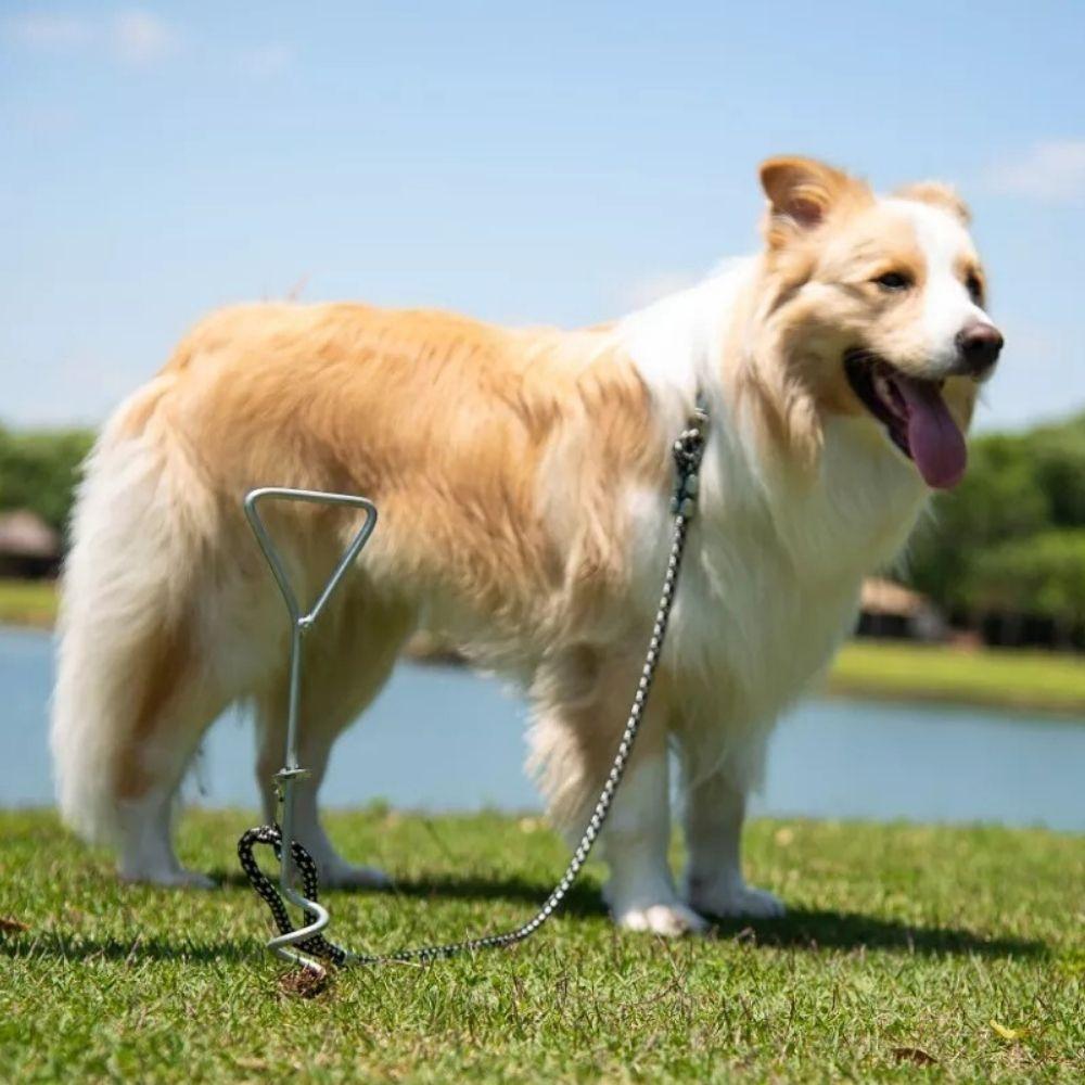 Estaca Guia e Coleira para Cachorro Refletivo Pawise