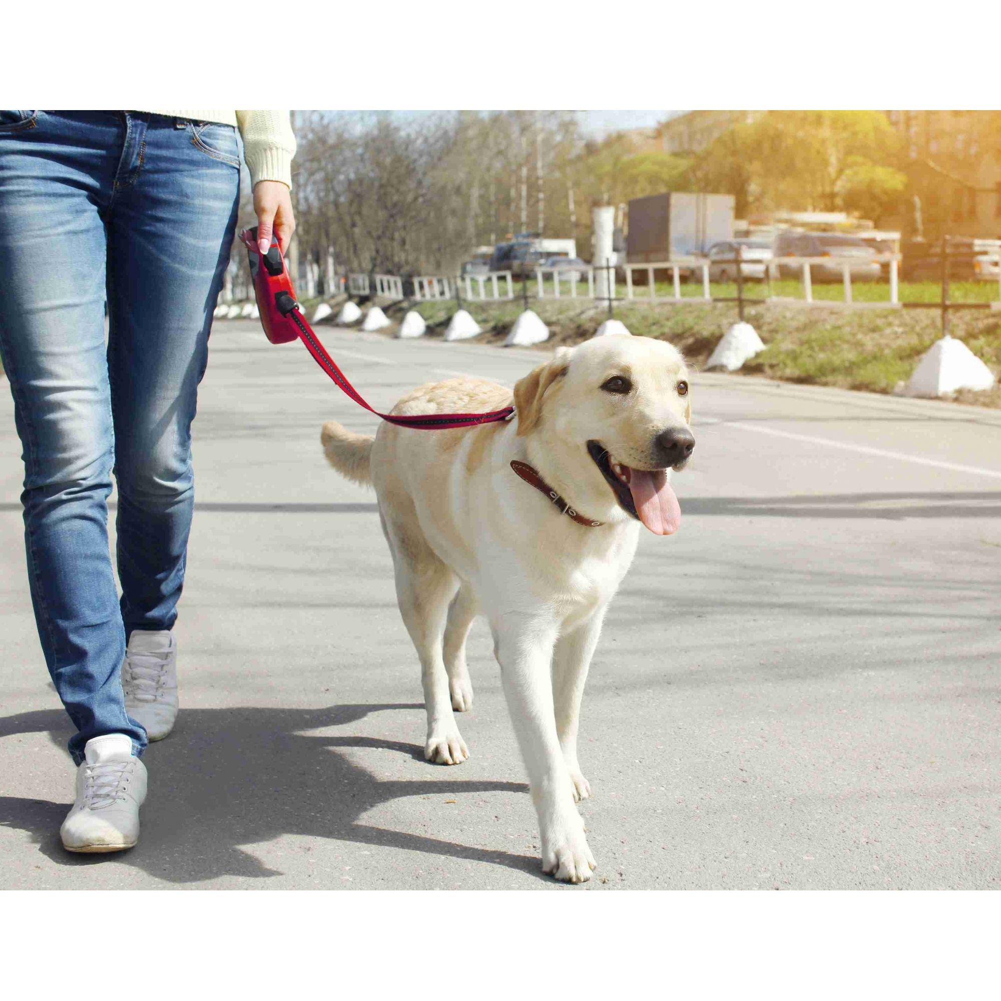 Guia Retrátil para Cachorro Médio 5M, 60kg Pawise