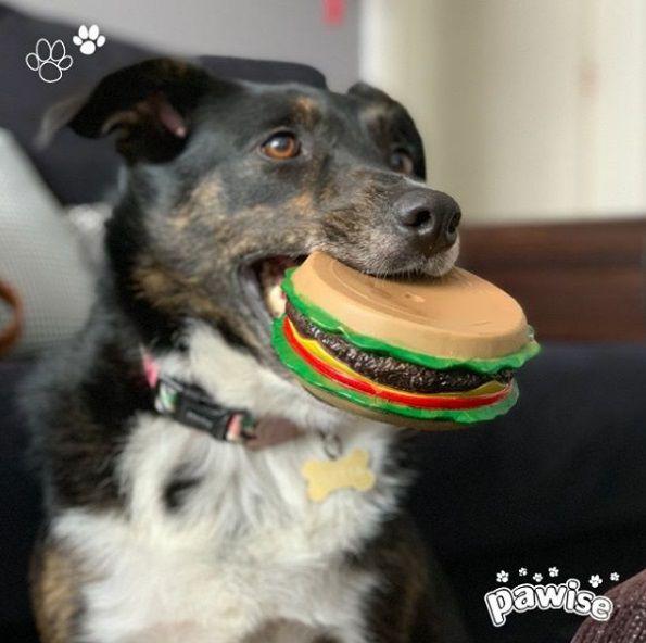Hambúrguer de Vinil para Cachorro Pawise