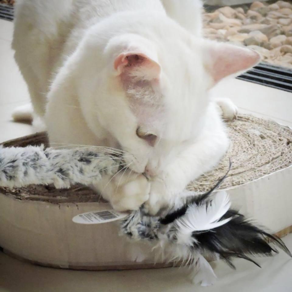 Kit com 3 Brinquedos Varinhas para gato Pawise