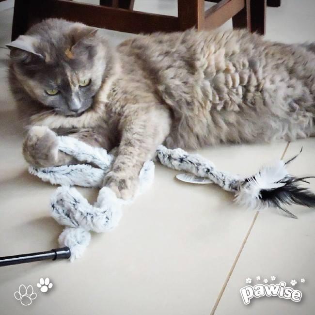 Kit com 3 Varinhas Brinquedo para gato Pawise