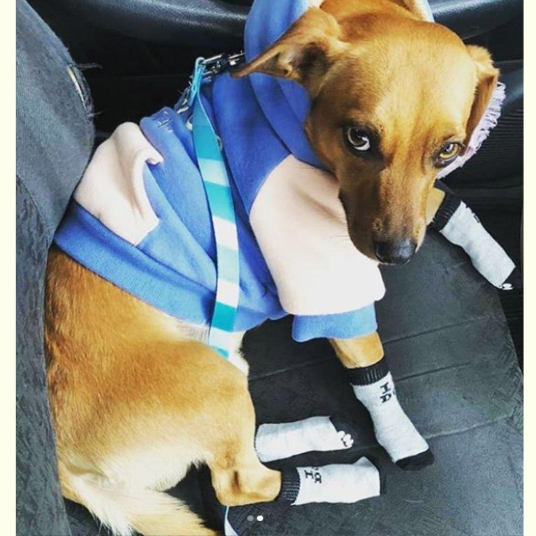 Meia para Cachorro listrada antiderrapante G Pawise