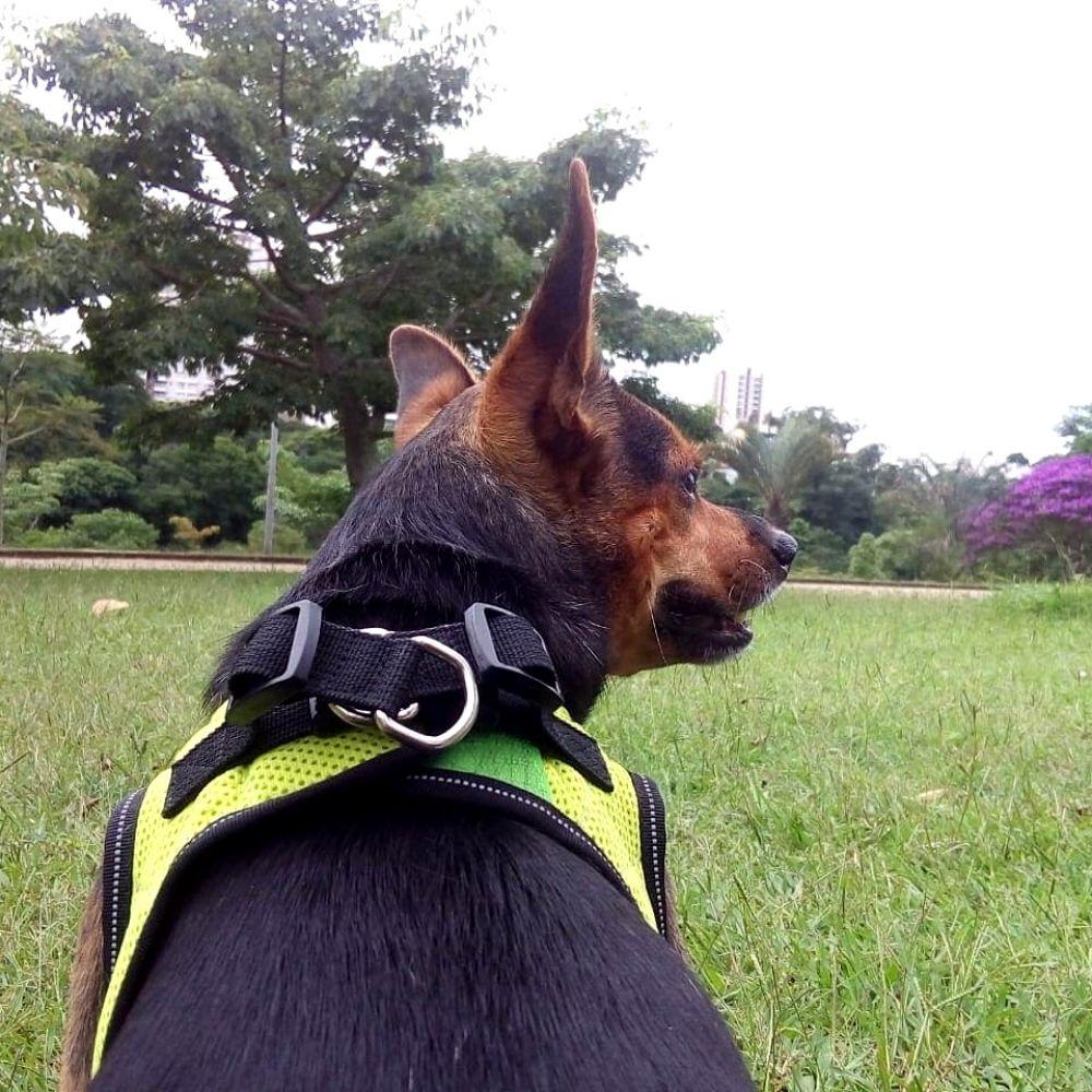 Peitoral de Segurança para Cachorro PP Pawise