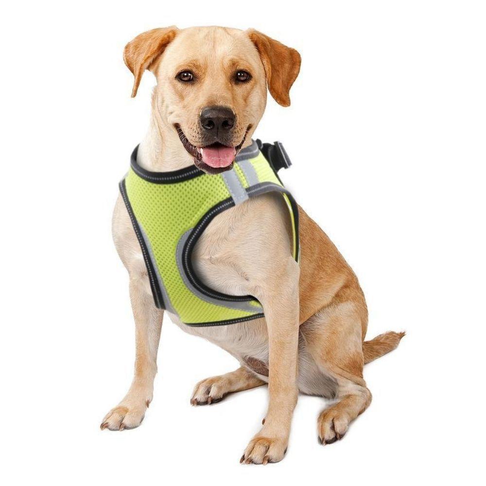 Peitoral de Segurança para Cachorro GG Pawise
