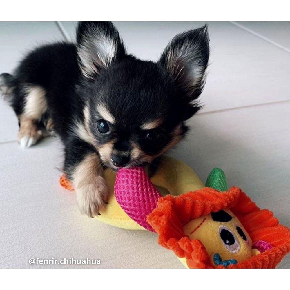 Pelúcia Leão com Apito para Cachorro Pawise