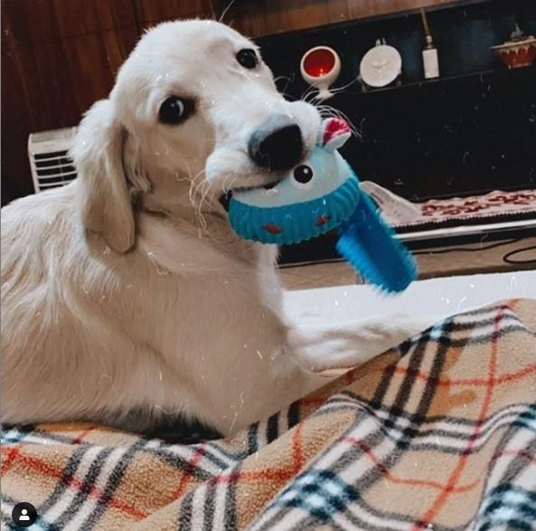 Pelúcia para Cachorro Com mordedor Pawise