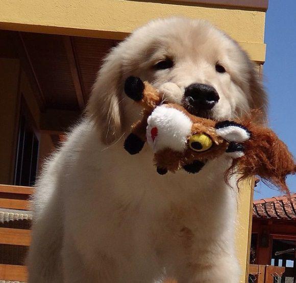 Pelúcia para Cachorro Raposa P Pawise