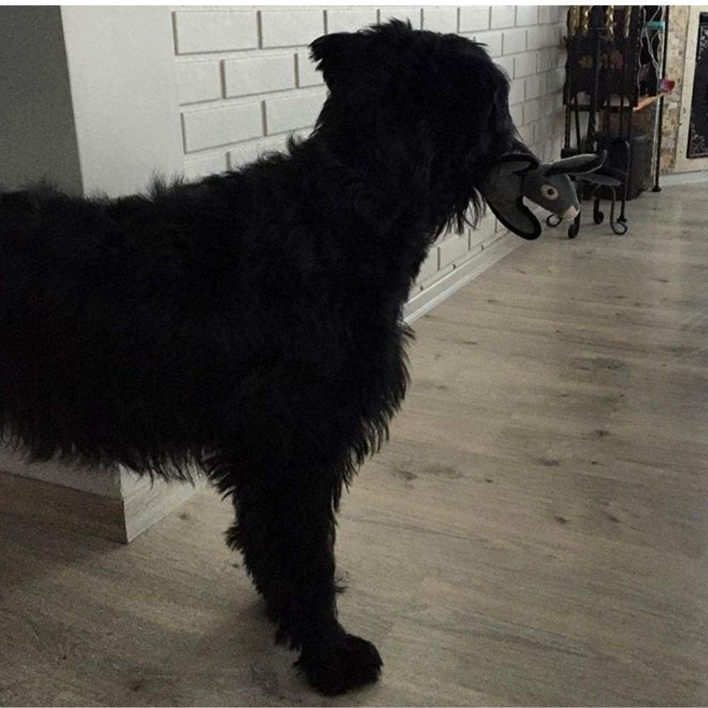 Pelúcia Resistente para Cachorro Coelho Pawise
