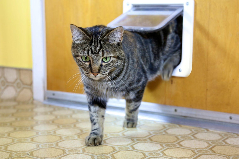 Portinha Grande para Gato 4 Funções Pawise