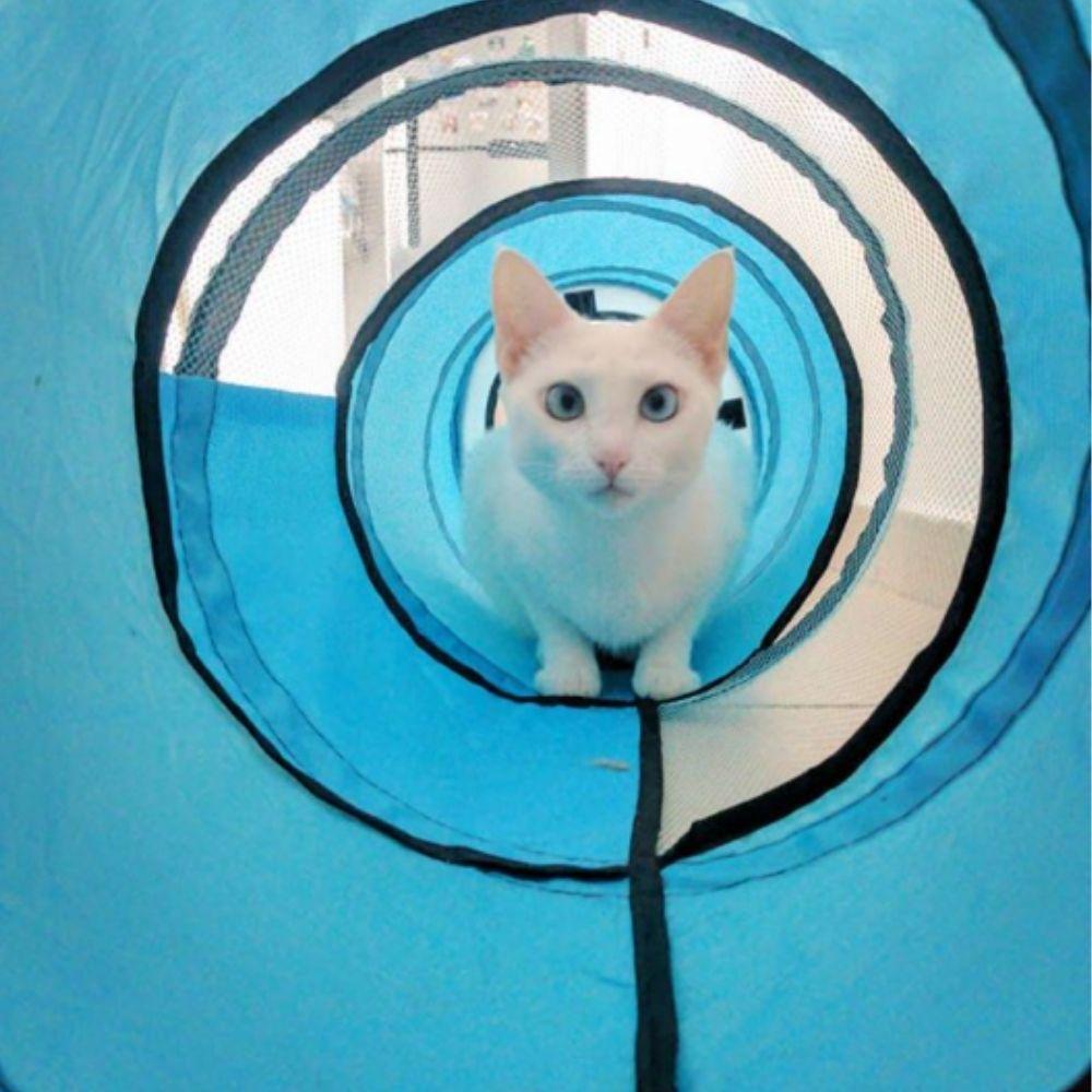 Túnel para Gato Pop-up Pawise