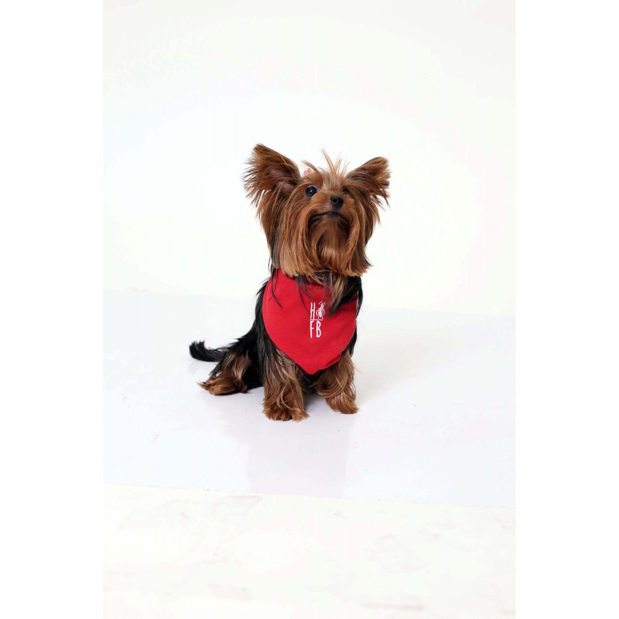 MÃE E PET > Kit 02 Peças - Vestido Polo e Bandana Vermelho Paixão [Coleção Tal Mãe Tal Filho]  - Heitor Fashion Brazil