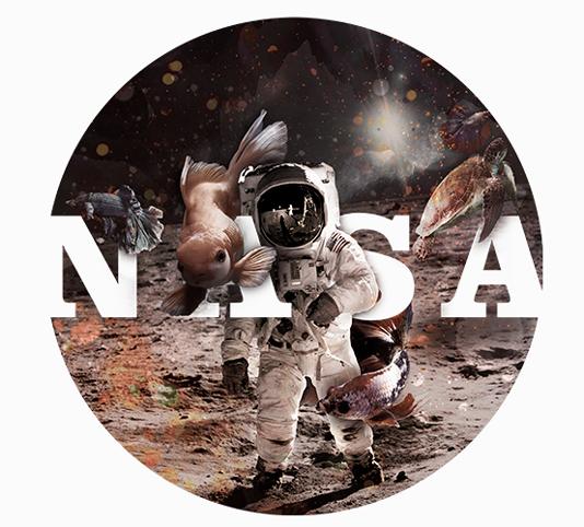 Long NASA