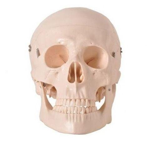 Crânio Em 5 Partes Anatomic