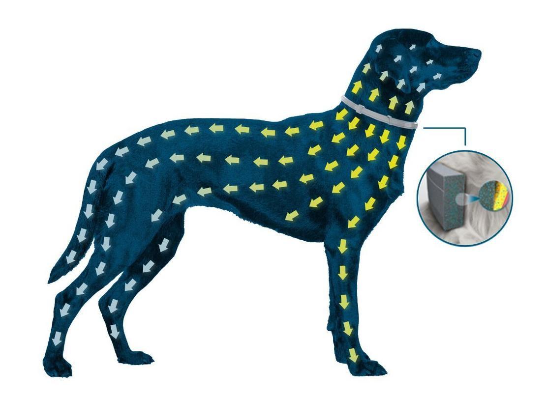 2 Coleiras Seresto P Bayer para cães e gatos até 8 kg
