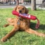 Brinquedo Interativo e Aquático Bastão com corda Signature Stick With Rope KONG para cães