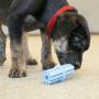 Brinquedo Mordedor Limpa Dentes para Filhotes Teething Stick Puppy KONG