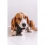 Casco de Boi Mordedor Natural Ruts Pet para cães